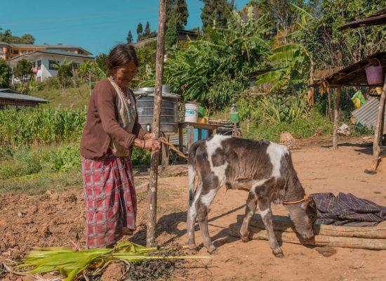 Bhutan Kuhprojekt